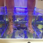 Gypset Lifestyle ~ Fish Pedicure