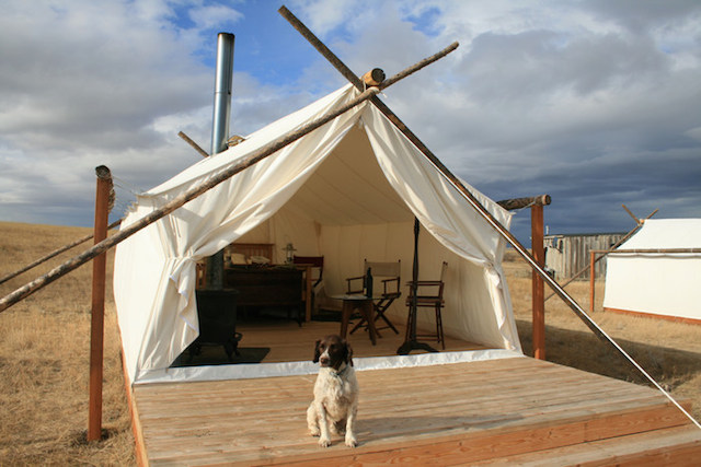 Dara foster 39 s dog glamping getaway gear guide for How to build a wall tent