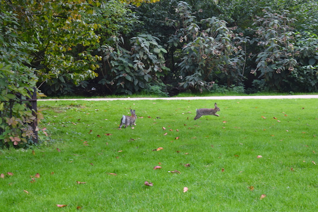 Bunnies in Amsterdam Park